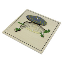 Turtle Skeleton Puzzle