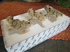 3 Texas Horned Toad Gift Set