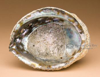 Abalone smudging shells
