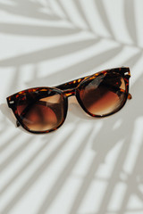 Tortoise - Square Sunglasses from Dress Up