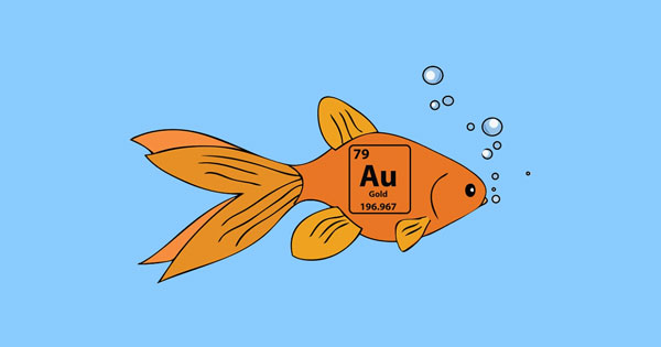 facebook-timeline-gold-fish-sj.jpg