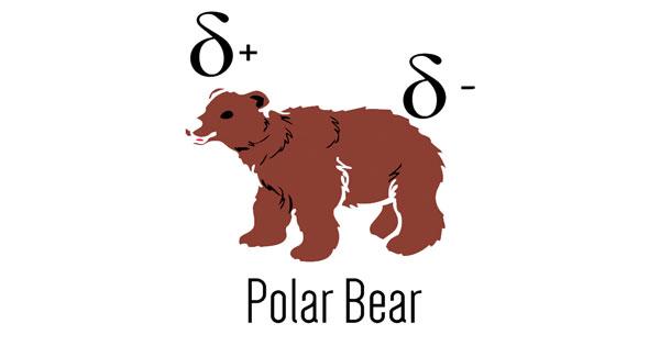 facebook-timeline-polar-bear-sj.jpg
