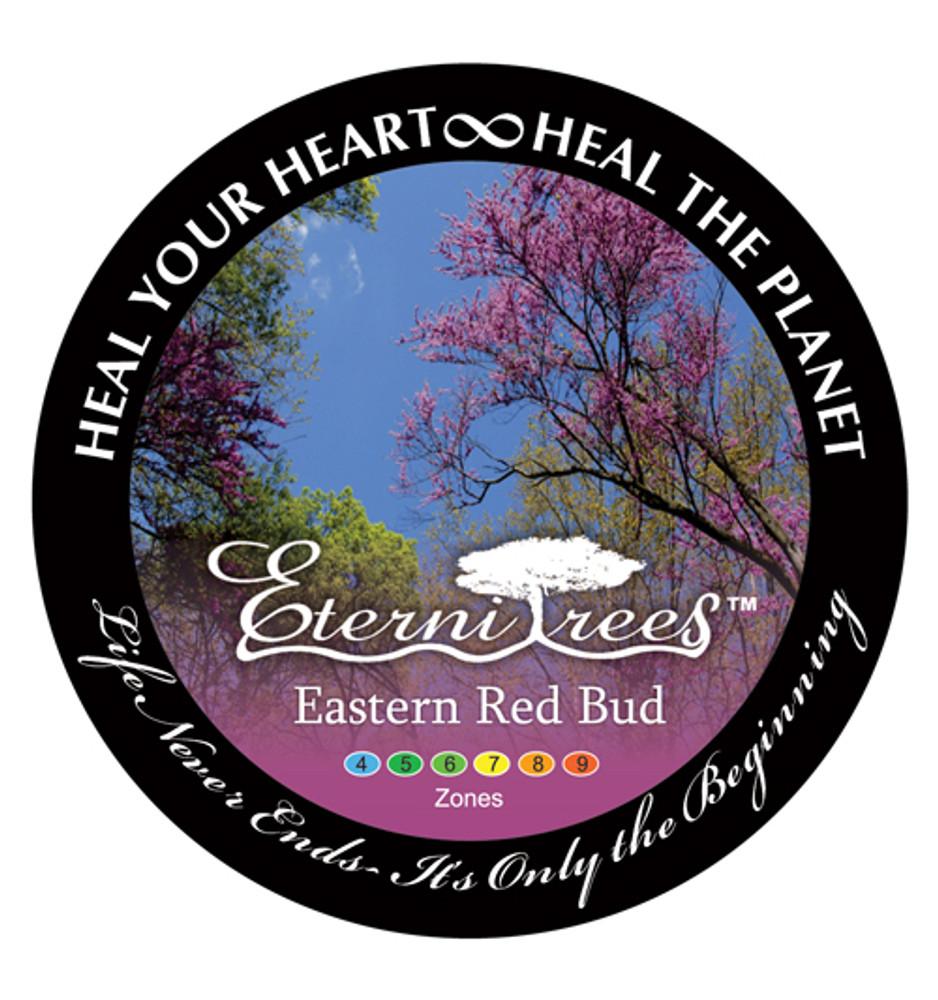 Biodegradable Memorial Tree Urns | Eastern Red Bud Tree