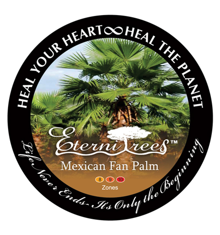 Biodegradable Memorial Tree Urn | Mexican Fan Palm