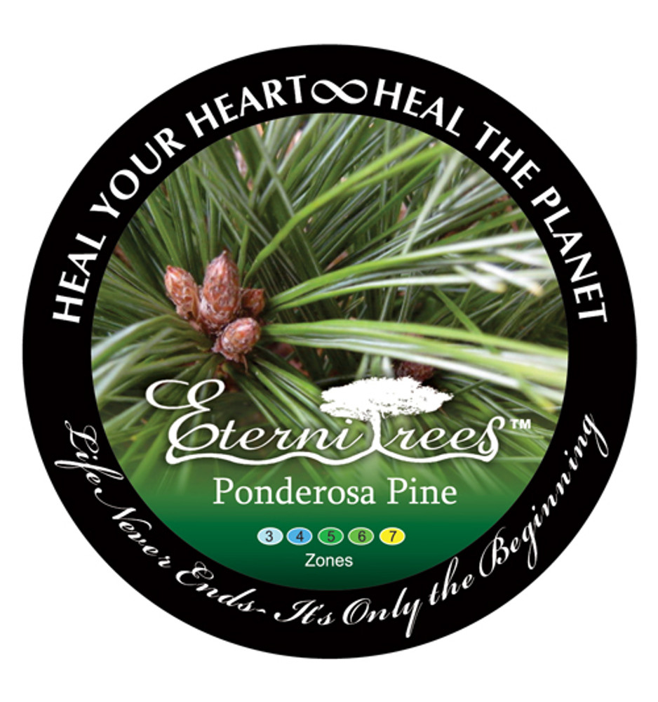 Biodegradable Memorial Tree Urn | Ponderosa Pine