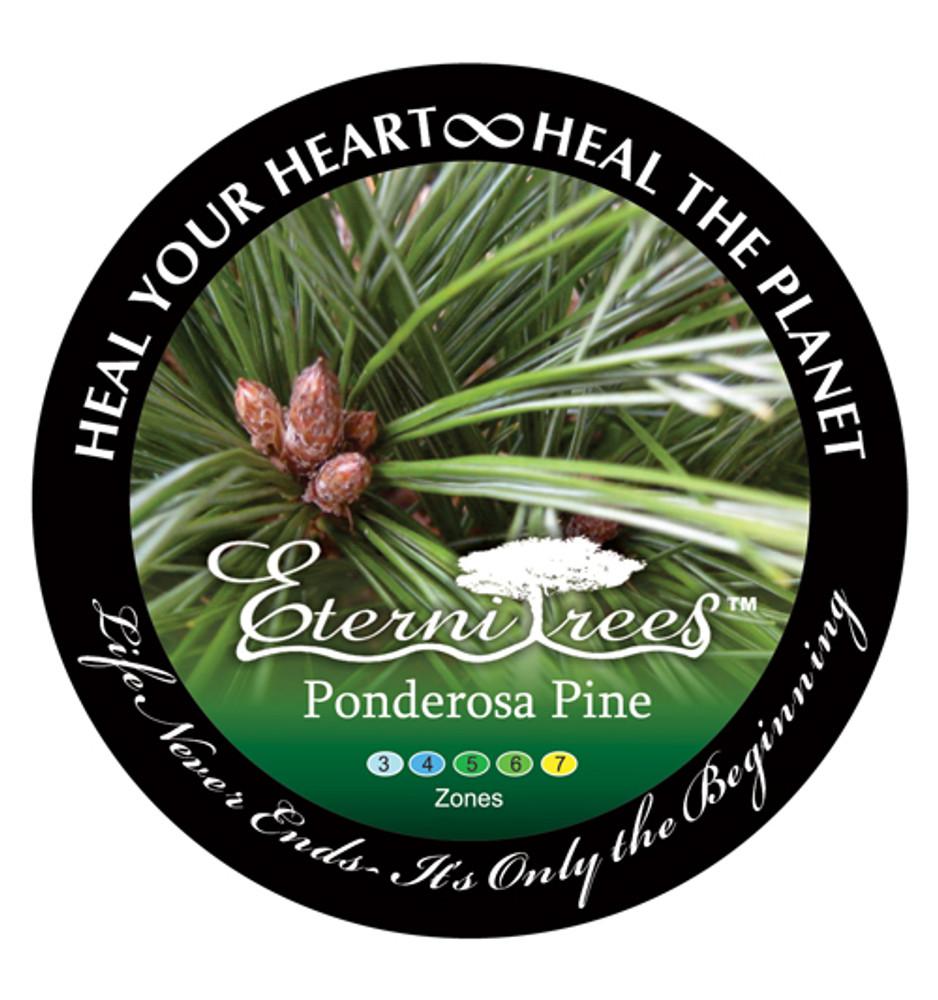 Biodegradable Memorial Tree Urn | Ponderosa Pine