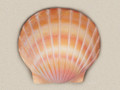 Sand Color Shell Water Scattering Urn