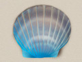 Aqua Color Shell Water Scattering Urn