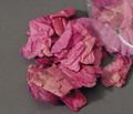 Bougainvillea Flower Petals