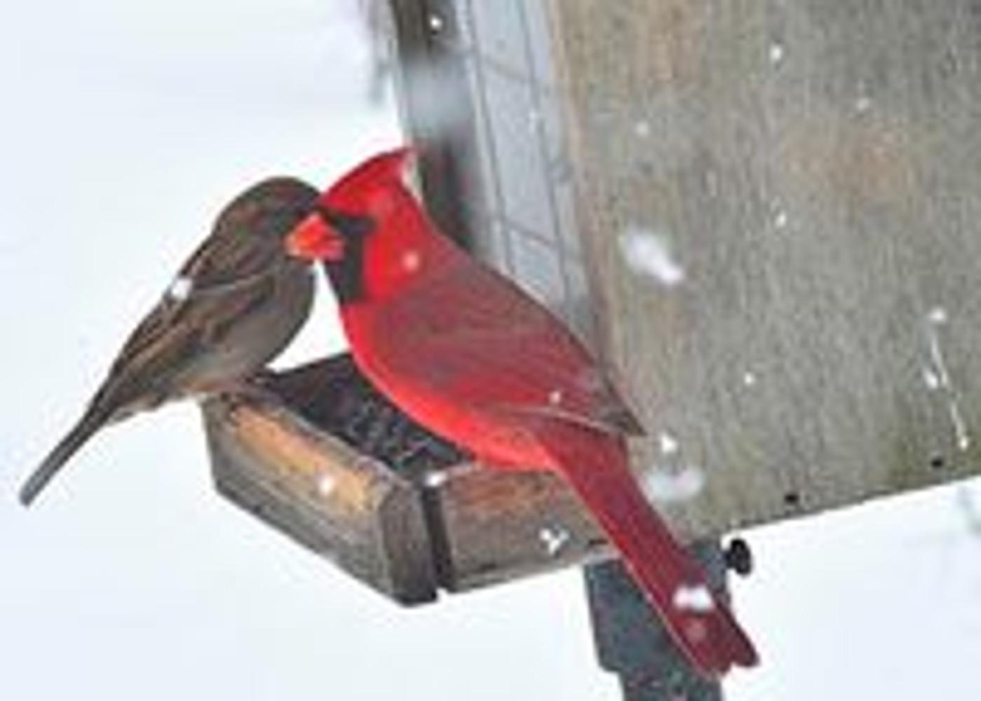 Cardinal Bird Cremation Urns with Engraved Wood Inlay Art