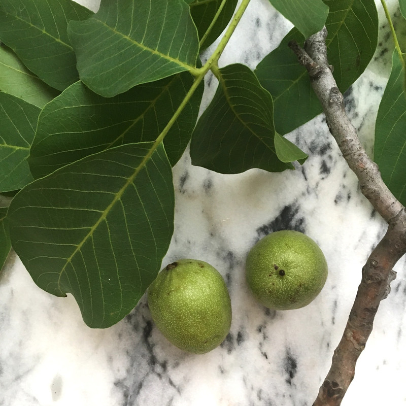 Organic green walnuts: slight oxidation will occur on skin upon arrival.