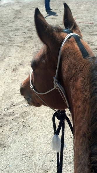 Customize your Rope Hackamore Set