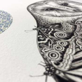 The Owl And The Butterfly art print detail 02 by Lauren Mortimer at Of Cabbages and Kings.