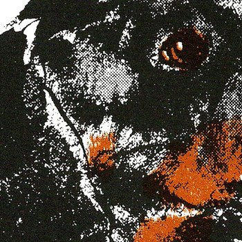 Dachshund screen print detail by Tiff Howick at Of Cabbages and Kings