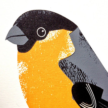 Bullfinch screen print close detail by Chris Andrews at Of Cabbages and Kings