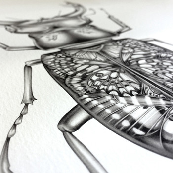 Butterfly Beetle art print detail 02 by Lauren Mortimer available at Of Cabbages and Kings.
