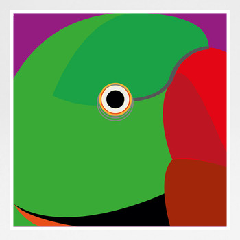 Ring Necked Parakeet Art Print by Julio Guerra at Of Cabbages and Kings