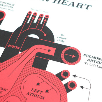 Human Heart art print detail 01 by John Devolle at Of Cabbages and Kings