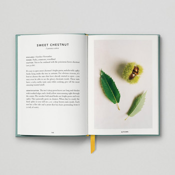 The Urban Forager Book Sweet Chestnut by Hoxton Mini Press at Of Cabbages and Kings