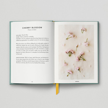 The Urban Forager Book Cherry Blossom by Hoxton Mini Press at Of Cabbages and Kings