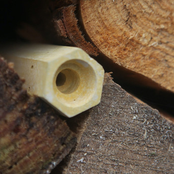 Bee Cell in a log pile 03 by Green & Blue at Of Cabbages and Kings