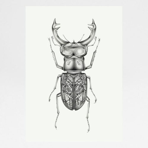 Butterfly Beetle art print by Lauren Mortimer available at Of Cabbages and Kings.
