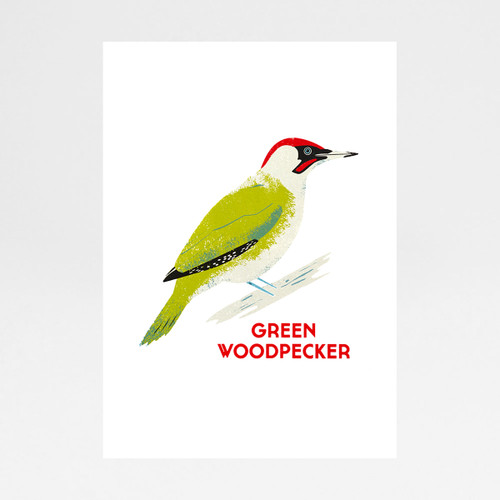 Green Woodpecker screen print by Chris Andrews at Of Cabbages and Kings