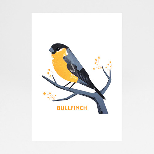 Bullfinch screen print by Chris Andrews at Of Cabbages and Kings