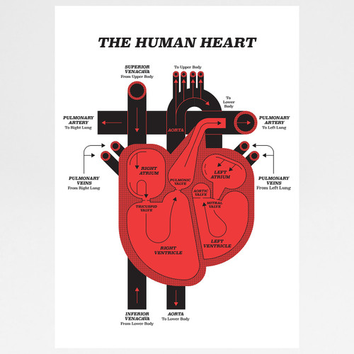 Human Heart art print by John Devolle at Of Cabbages and Kings