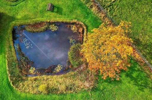 pond-overhead.jpg