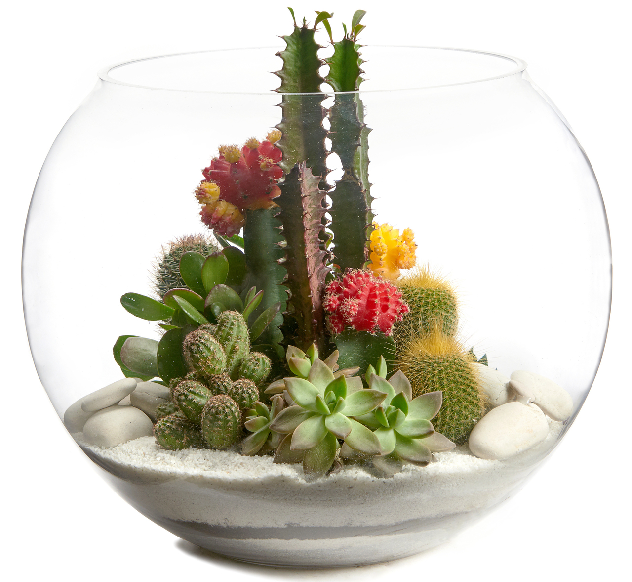 Fishbowl Large White Terrarium Plant The Future