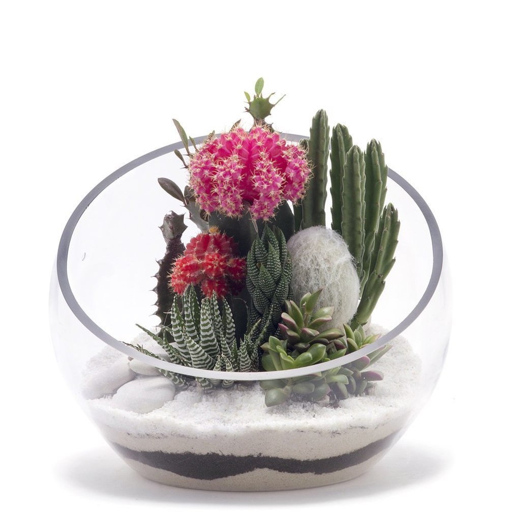 "Half Moon Terrarium Medium - White (7.5"" H x 9.5"" D)"