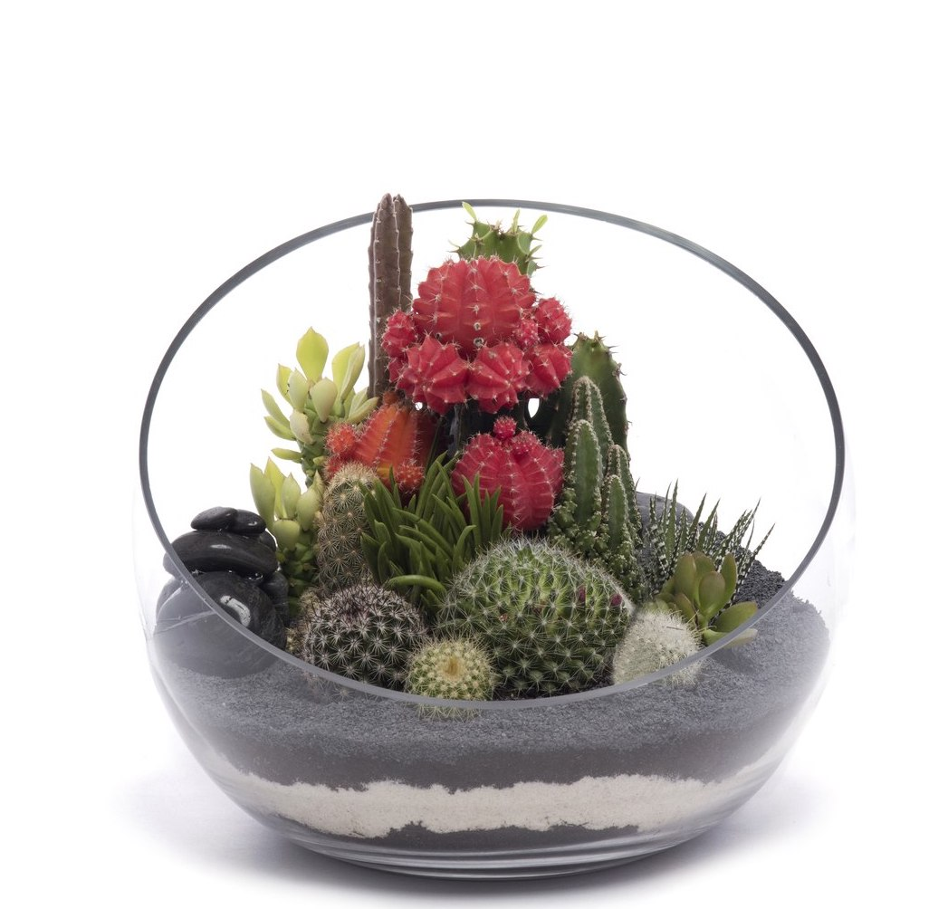 "Half Moon Terrarium Medium - Black (7.5""H x 9.5"" D)"