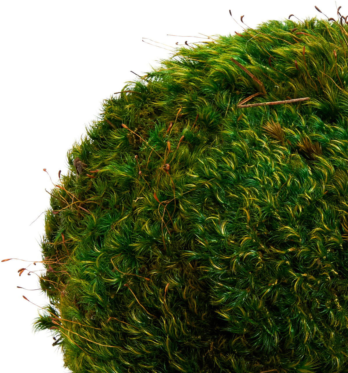 Hanging Moss Sphere - 7''