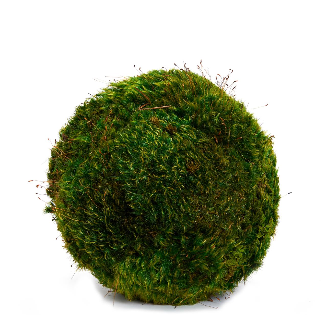Hanging Moss Sphere - 5''