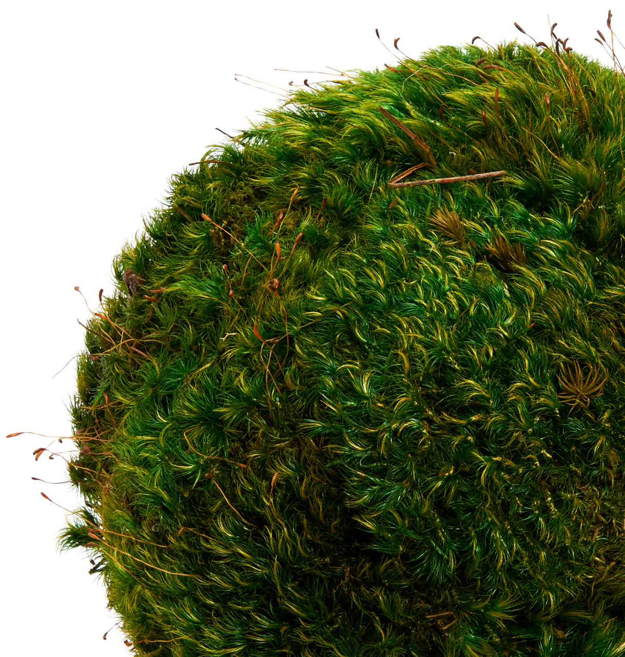 Moss Sphere - Small (4'')