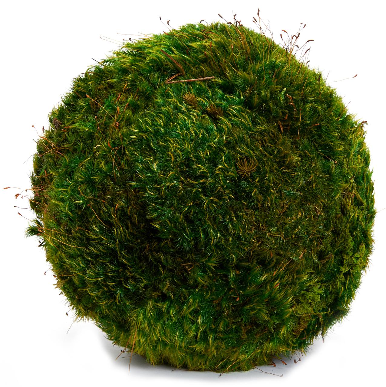 Moss Sphere Medium (6'')