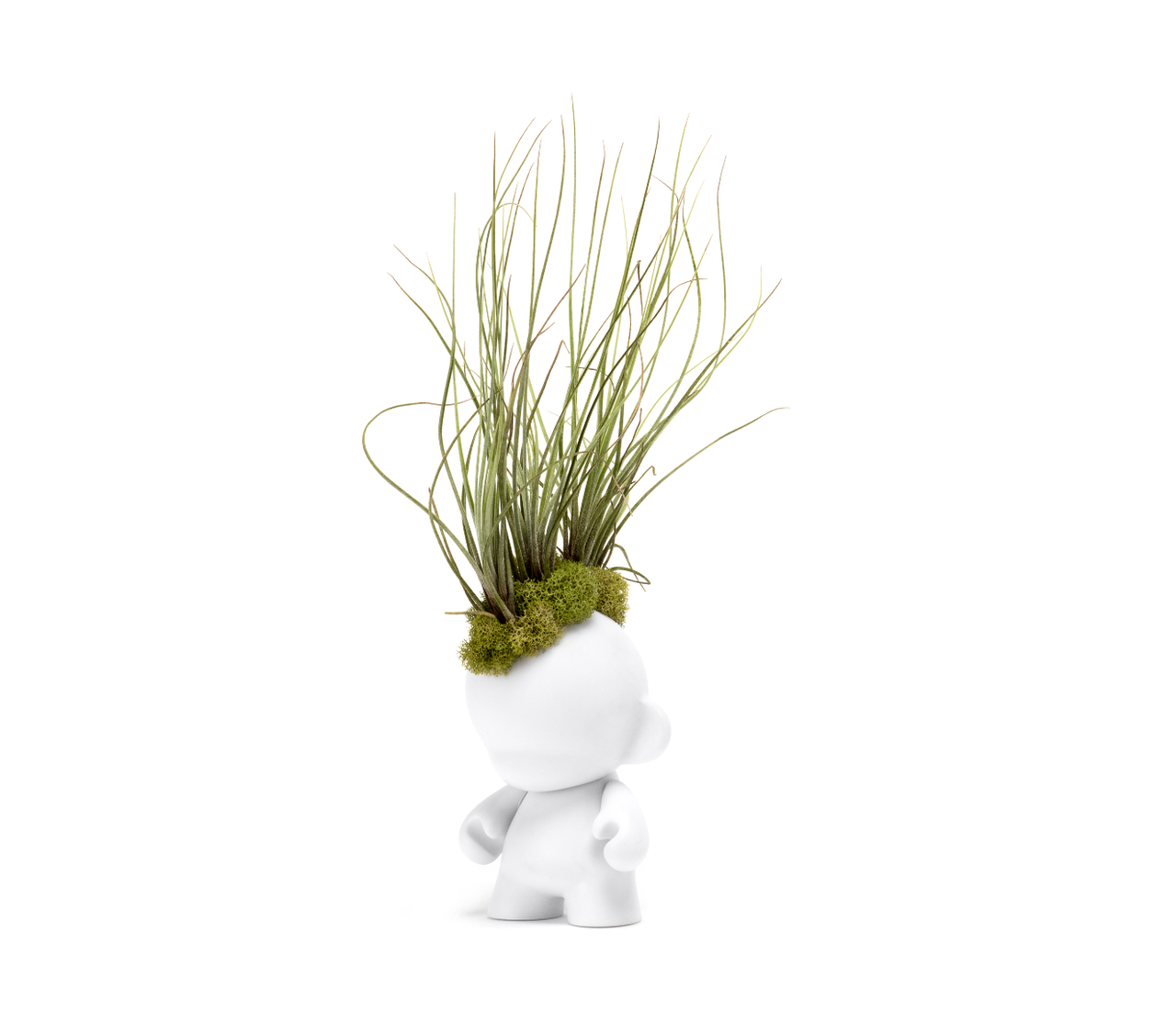 "Munny Small Mohawk - Small Juncea Airplants (15"" H x 5"" W)"