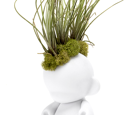 "Munny Mini Mohawk - Small Juncea Airplants (12"" H x 3"" W)"
