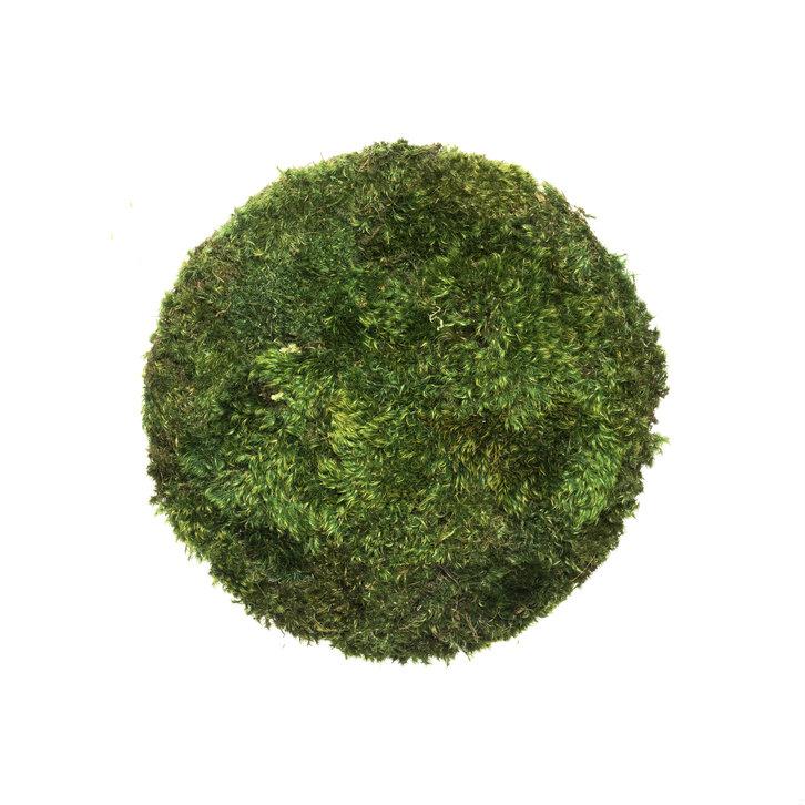 small moss circle
