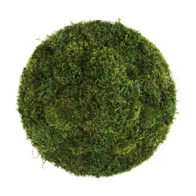 "Moss Circle Medium (20"" H x 20"" W)"