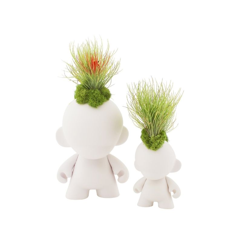 Munny Mini Mohawk - Andreana Airplants