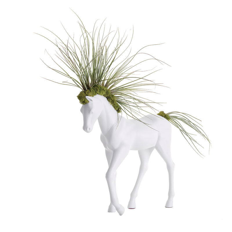 Small walking white horse with airplants