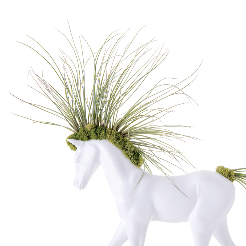 "Horse Small Walking - Juncea  Airplants (20"" H x 11"" W)"