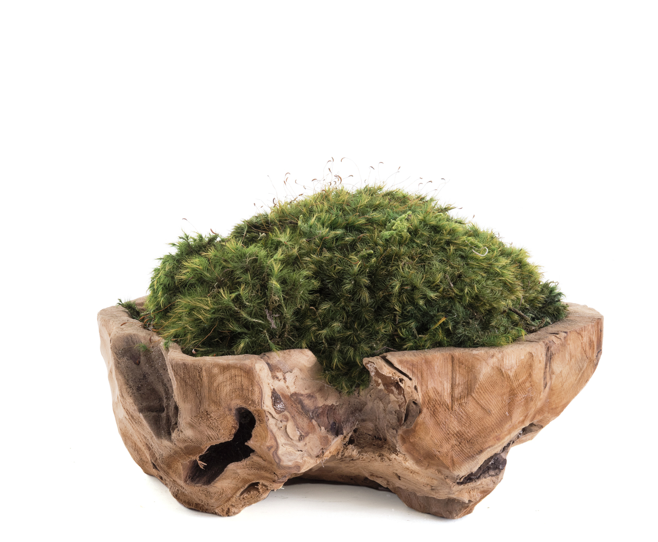 "Natural Wood Low Bowl - Moss (Small - 12"")"