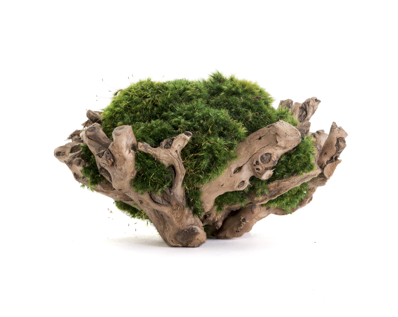 "Natural Wood Pedestal Bowl with Moss (8"" H x 18"" W)"