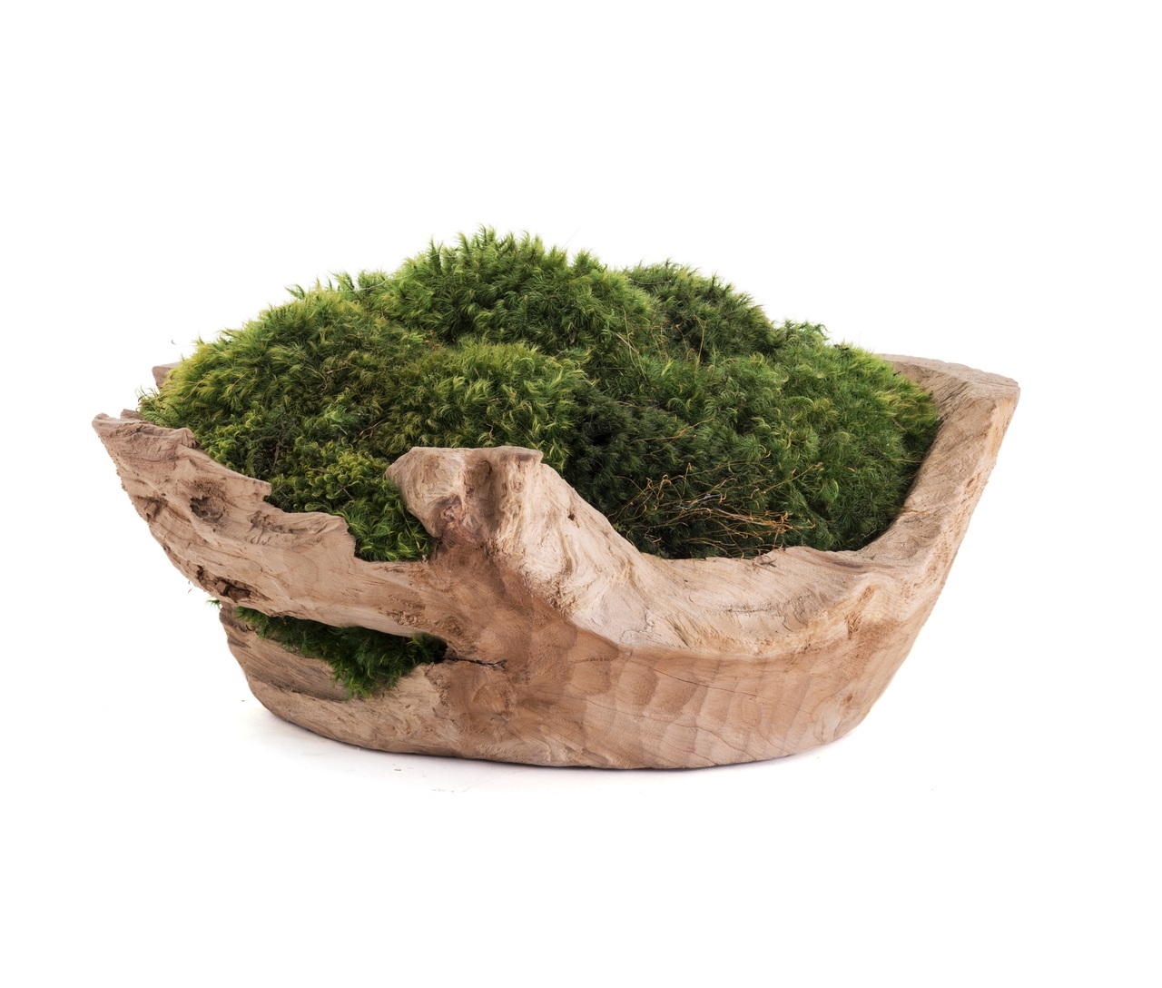 Moss centerpiece: Natural wood bowl with preserved moss