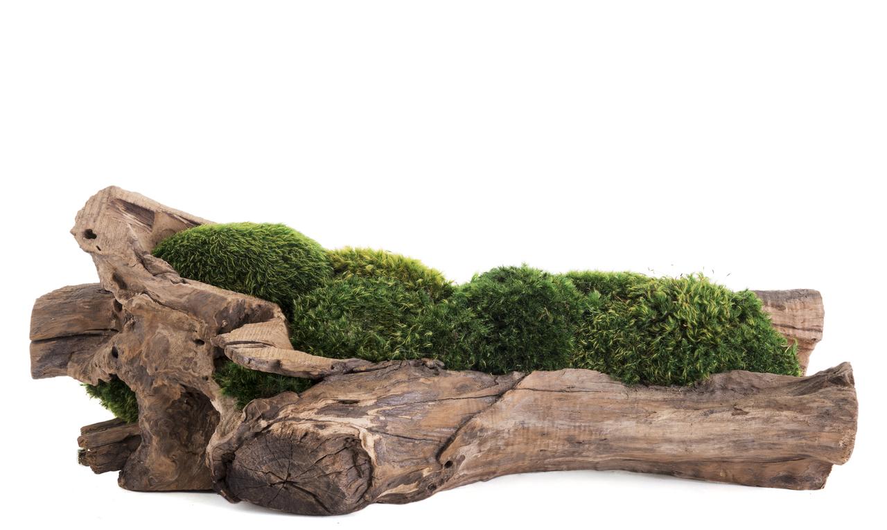 "Natural Wood Trough Short - Moss (6"" H x 16"" W)"