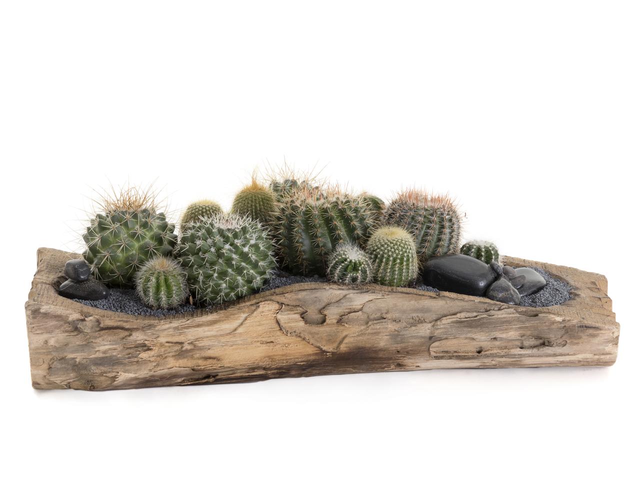 "Natural Wood Trough Short - Low Green Garden (10"" H x 16"" W)"