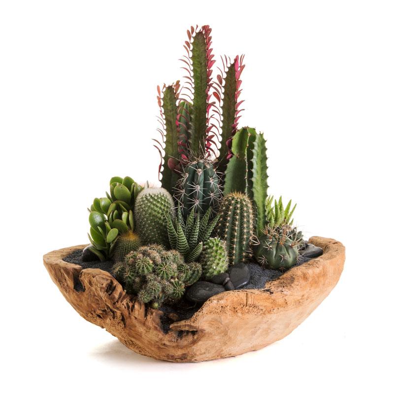 "Natural Wood Low Bowl Large (D18"") - Garden"
